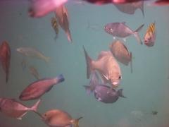 Lotsa fish!