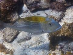 Aruba, December 2012