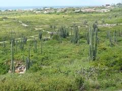 View towards San Nicolas
