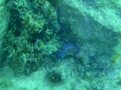 First octopus!