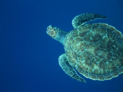 Turtles, turtles