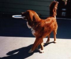 Buck on the deck