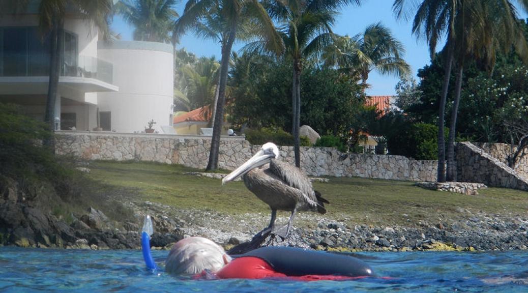 Pelican hunting!