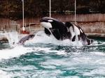 Vancouver Aquarium Whale show