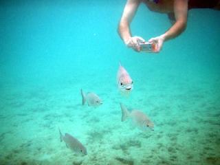 Chasing fish