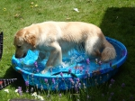 Bailey in the pool