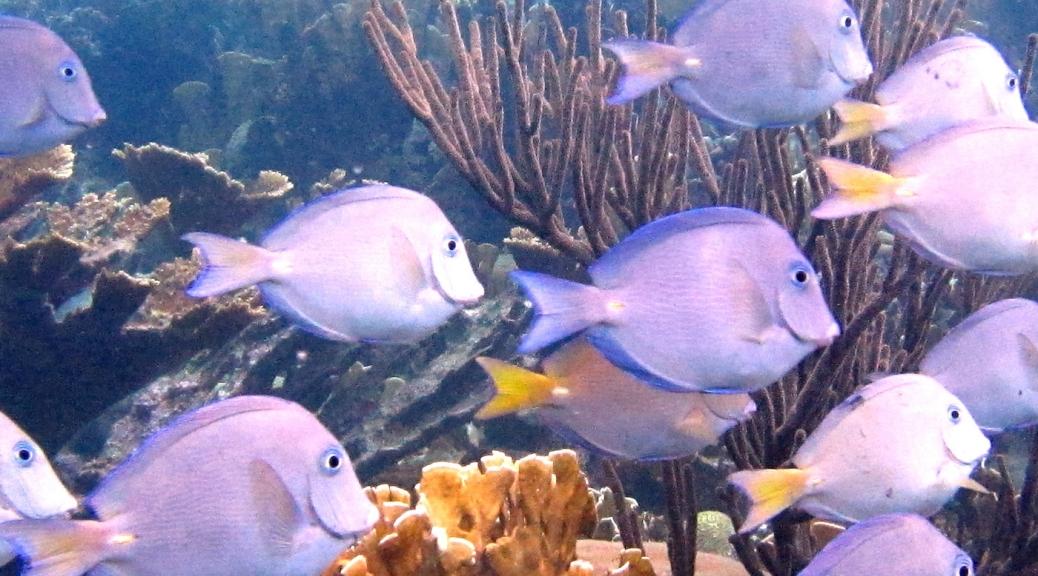 Sea Aquarium beach