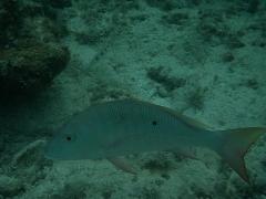 Cool big Fish
