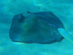 Stingray_City.jpg