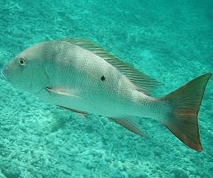 BIG-Ass-Fish
