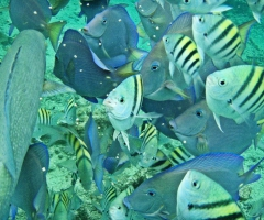Fish feeding frenzy