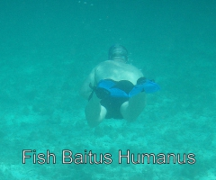 Fish baitus humanas