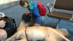 Bailey in the airport