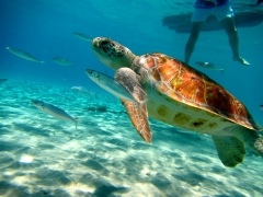Turtle picture