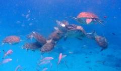 Lotsa turtles