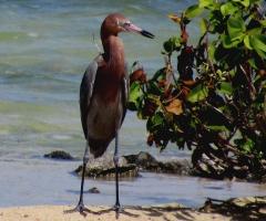 Some bird on Bonaire