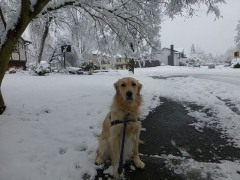 Bailey in the snow