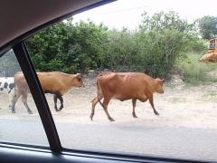 Pedestrians, St. Maarten